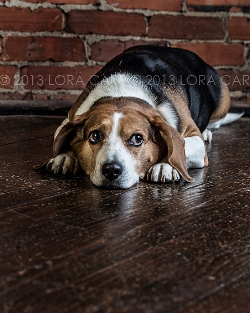 dog_photographer_117.jpg